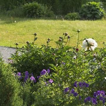 Merjan puutarha