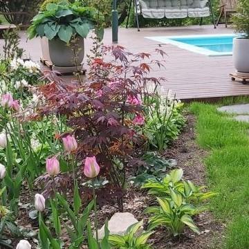 Puutarhakissanpäiviä - omakotitalon puutarha Vartioharjussa