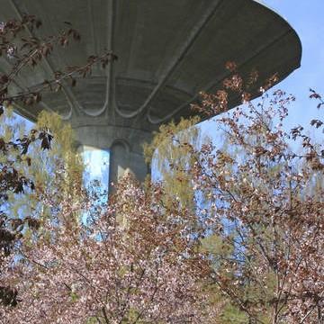 Körsbärsparken, Sakura Park