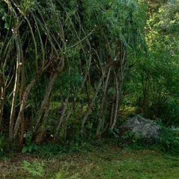 Marianne Saaris trädgård