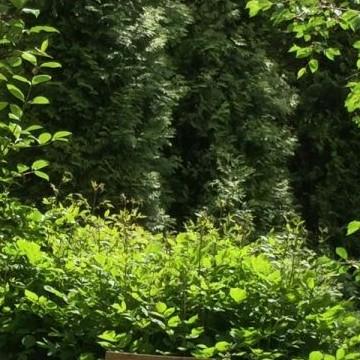 Katarinan puutarha