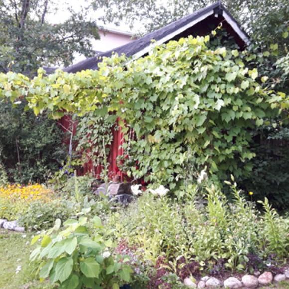 Irene Tigerstedtin puutarha
