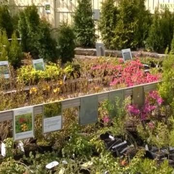 Särkkä Perenn plantskola