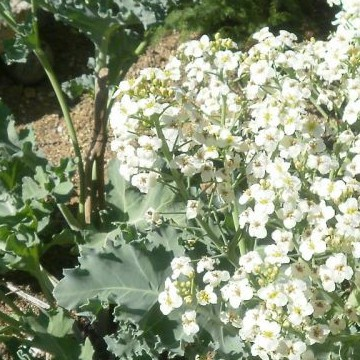 Eevan ja Jorman ruusutarha