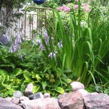 Siskos trädgård