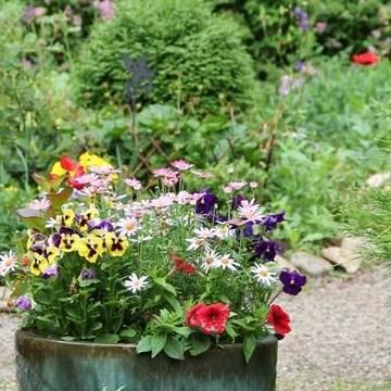 Päiväkumpu Flowers Garden