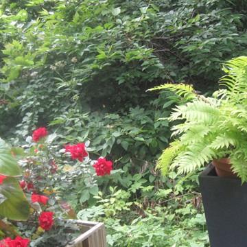 Manninens trädgård