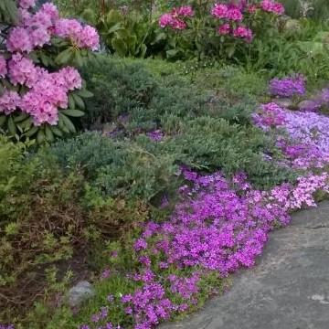 Rävbergets trädgård