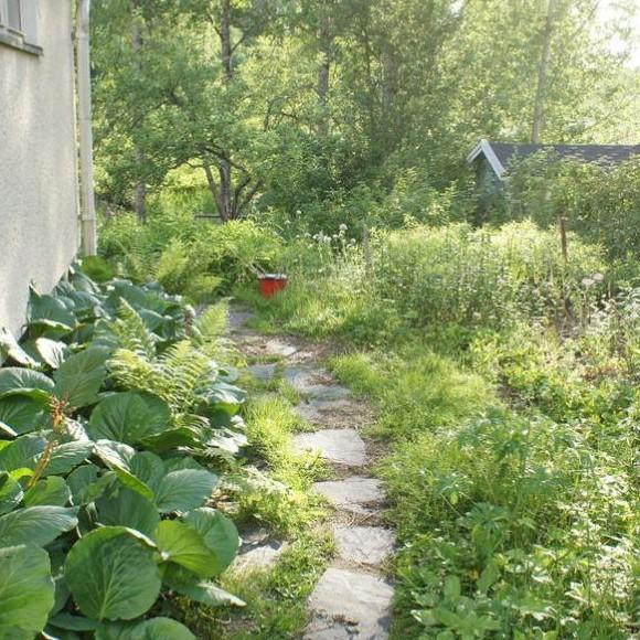 Milla Sairanens trädgård