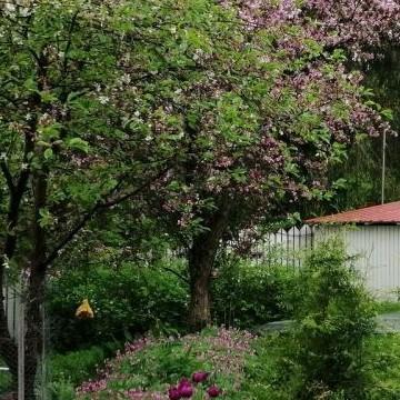 Tarjan puutarha