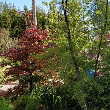 Mirja och Markku Salminens trädgård
