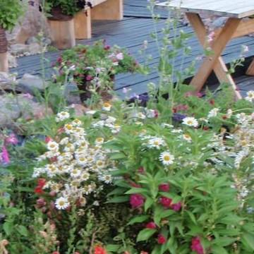 Sirje Mändlan puutarha