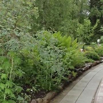 Anitas och Mattis trädgård
