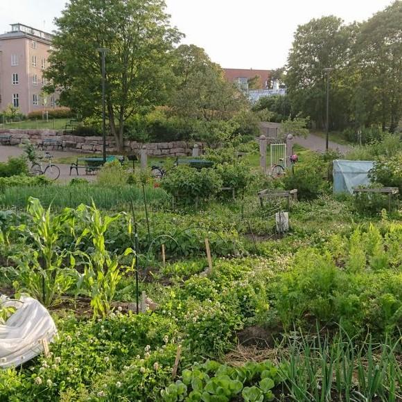 Hermannin puutarha
