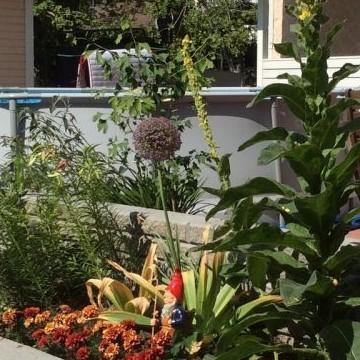 Riitan ja Arin puutarha