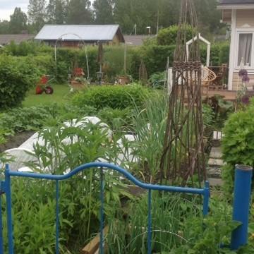 Odlingslott på Linnunlahti koloniträdgården