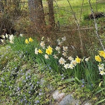 Lailan puutarha