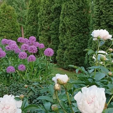 Kaksi puutarhaa