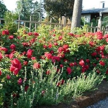 Muistojen puutarha