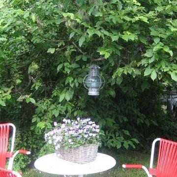 Bepita Kauniston puutarha