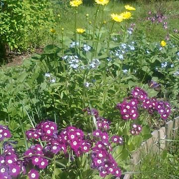 Hannele Simosen puutarha