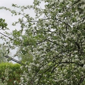 Lenas och Juhas trädgård