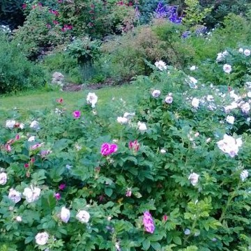 Arboretum Martti Kuhlberg