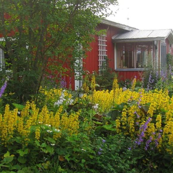 Vuokko Niemeläs trädgård