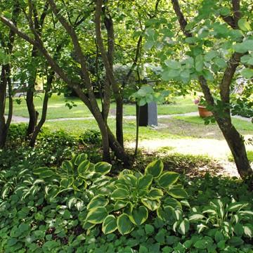 Raili Kuronens trädgård