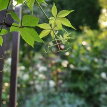 Gammegårds torp och trädgård