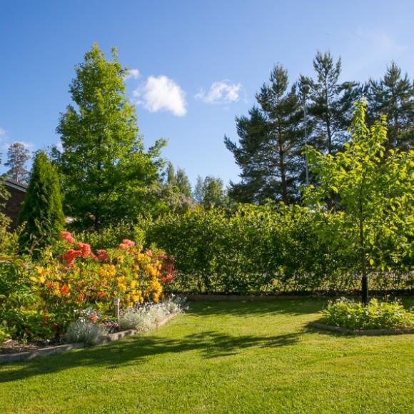 Trädgården Vesalat