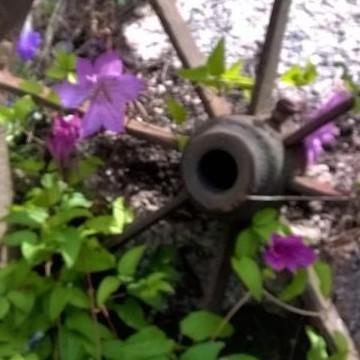 Annen ja Eskon puutarha MÄNTYVAARA