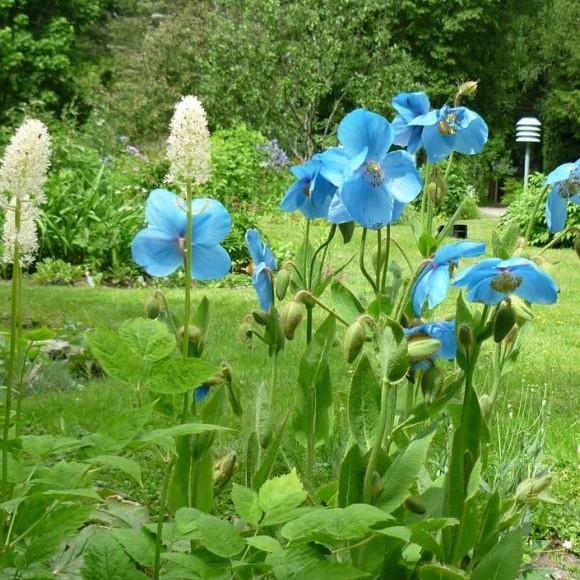 Sonja Isakssons trädgård