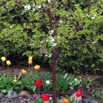 Annen puutarha