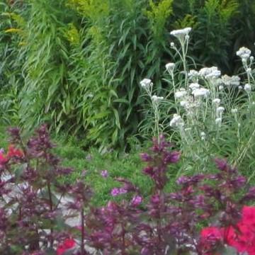 Ullas trädgård