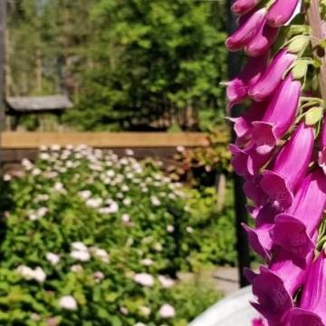 Niina Koivulan puutarha
