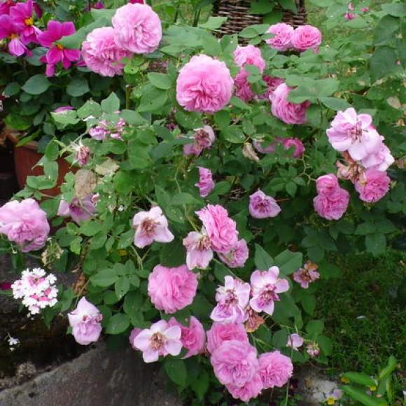 Viherpeipon puutarha