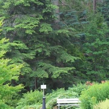 Arboretum Yltöinen