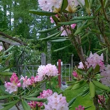 Lohigatans trädgård