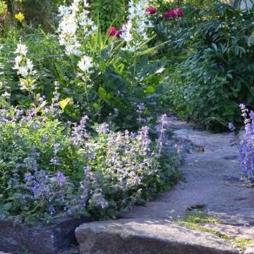 Annes och Christophs trädgård