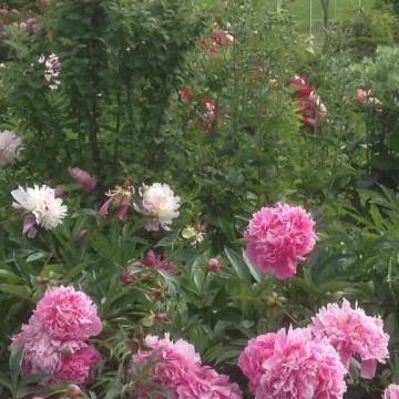 Leirinpelto, Helys trädgård