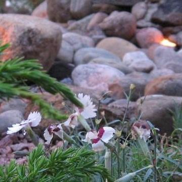 Vivamon hiljaisuuden puutarha
