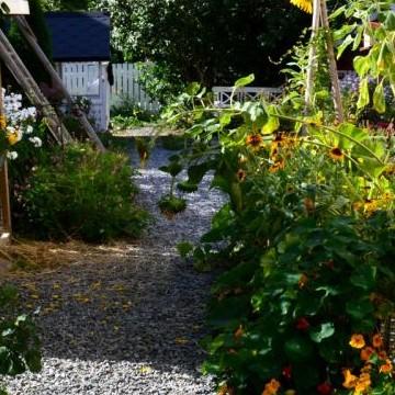 Heinin puutarha ja citykanat Tampere