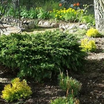 Kirsis och Ismos trädgård