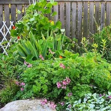 Mirjan ja Pekan puutarha