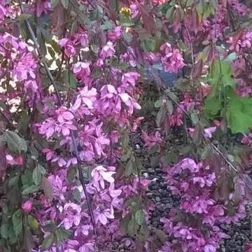 Kirstin puutarha