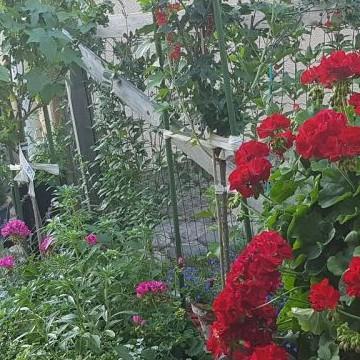 Meris trädgård
