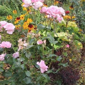 Marjan ja Pertin puutarha