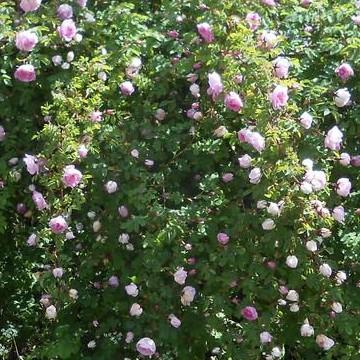 Anja Levonrantas trädgård
