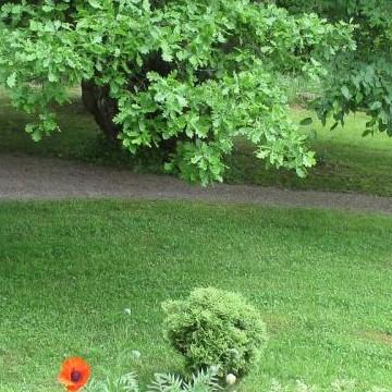 Vanhan pappilan puutarha v1824